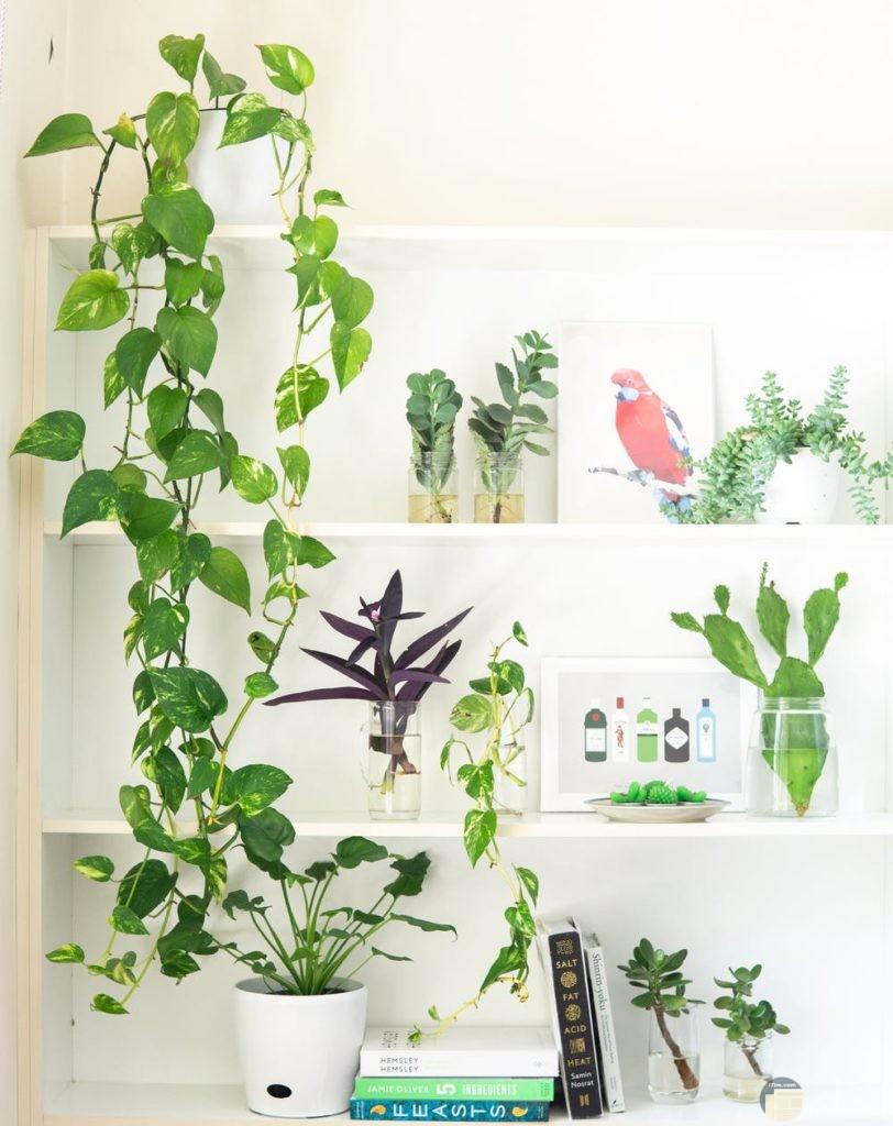 صور نباتات