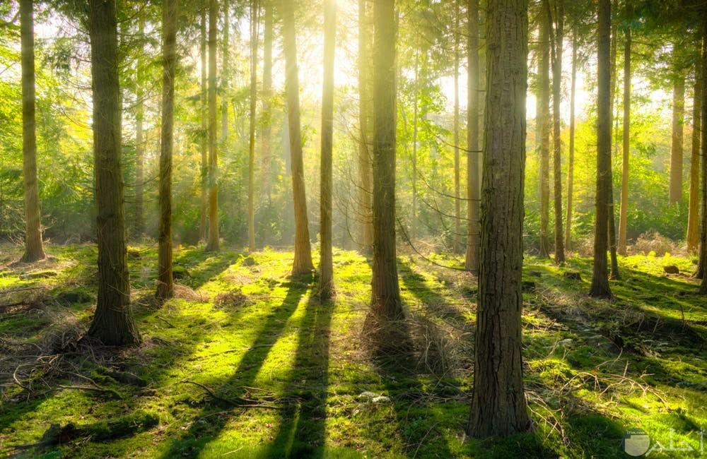 صور غابات خضراء