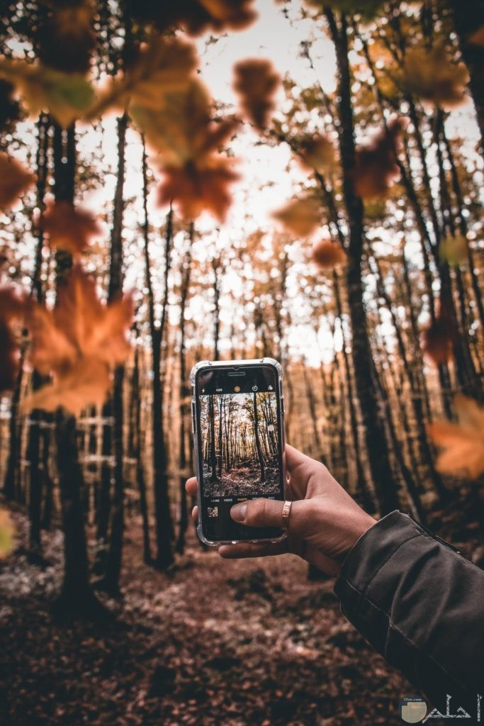 صور هادئة لأحد يلقط صورة للغابات