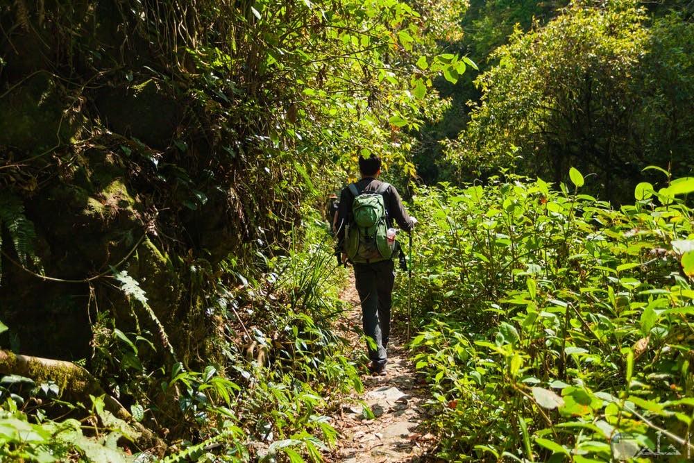 صور هادئة لشاب يمشي بالغابات
