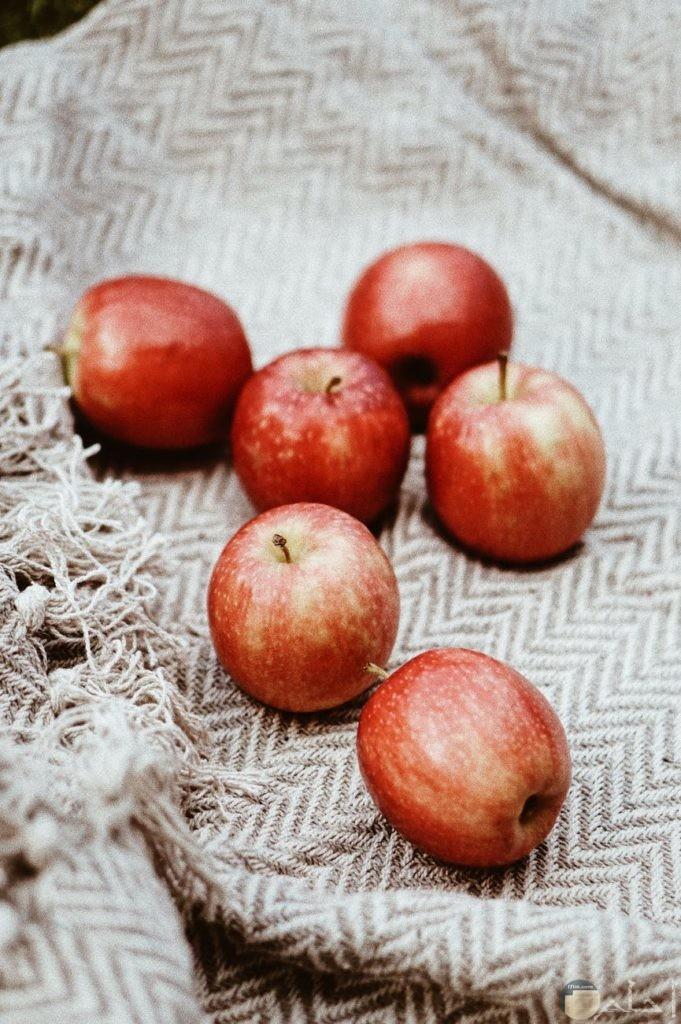 صور مميزة لمجموعة من التفاح