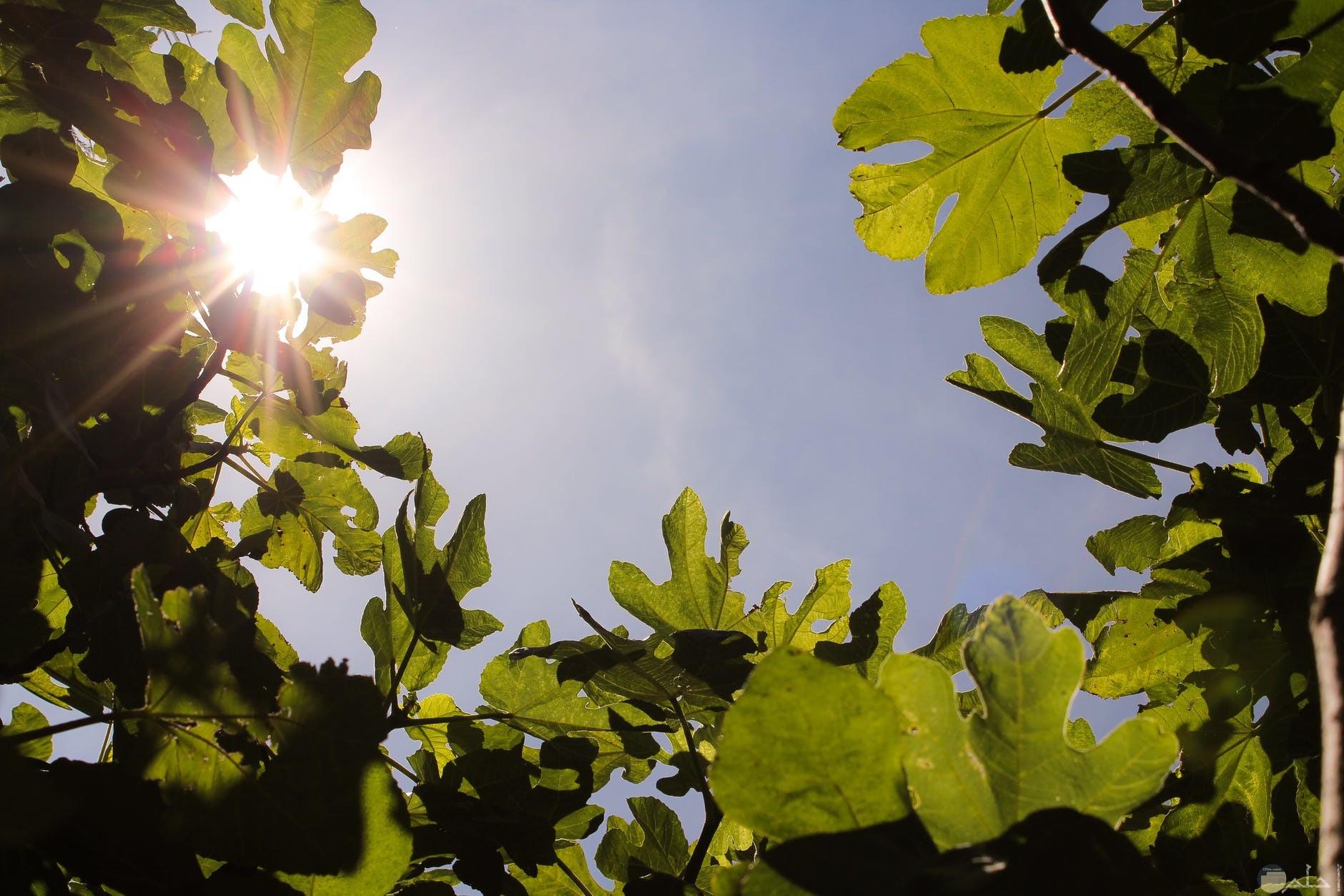 نباتات بضوء النهار