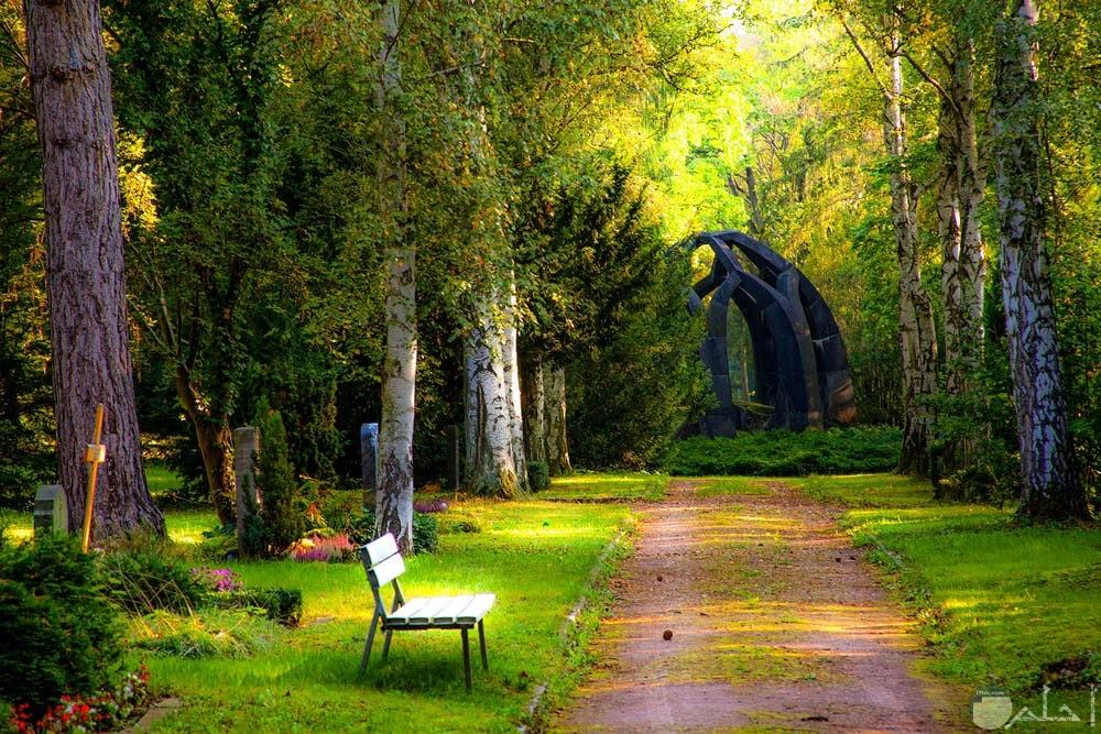 صور غابات روعة للتنزة