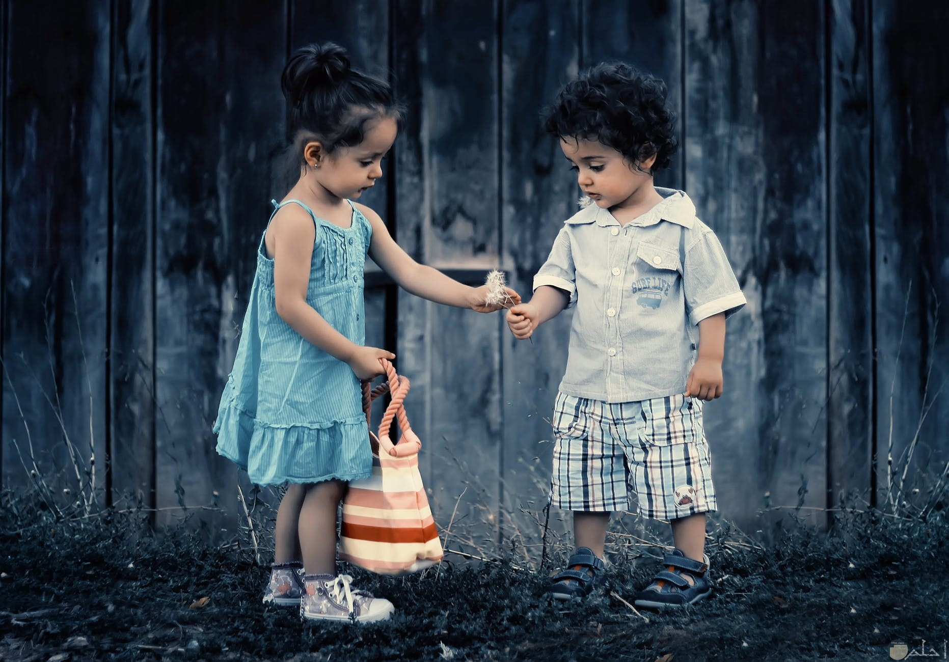 صورة اطفال يتبادلون الورد