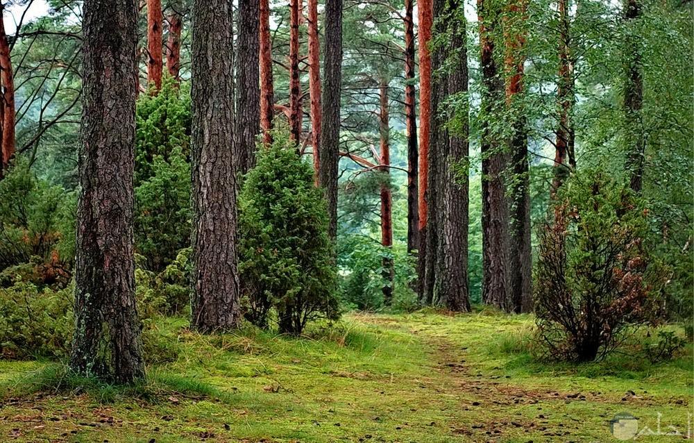 جمال الأشجار بالغابات
