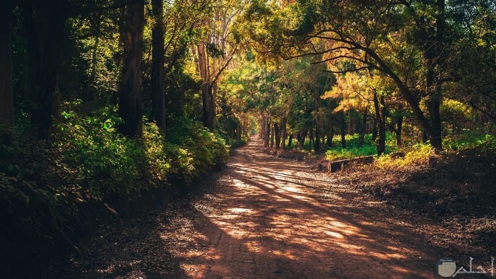 صور هادئة طبيعية رائعة للجناين