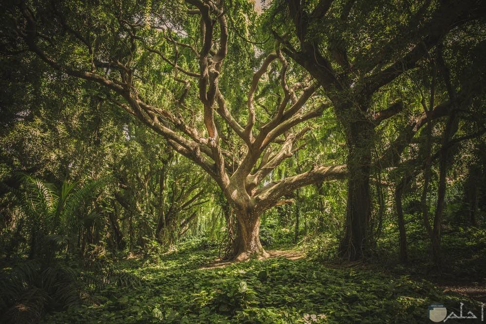صور الأشجار والغابات