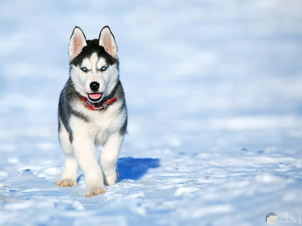 صور كلب على الجليد