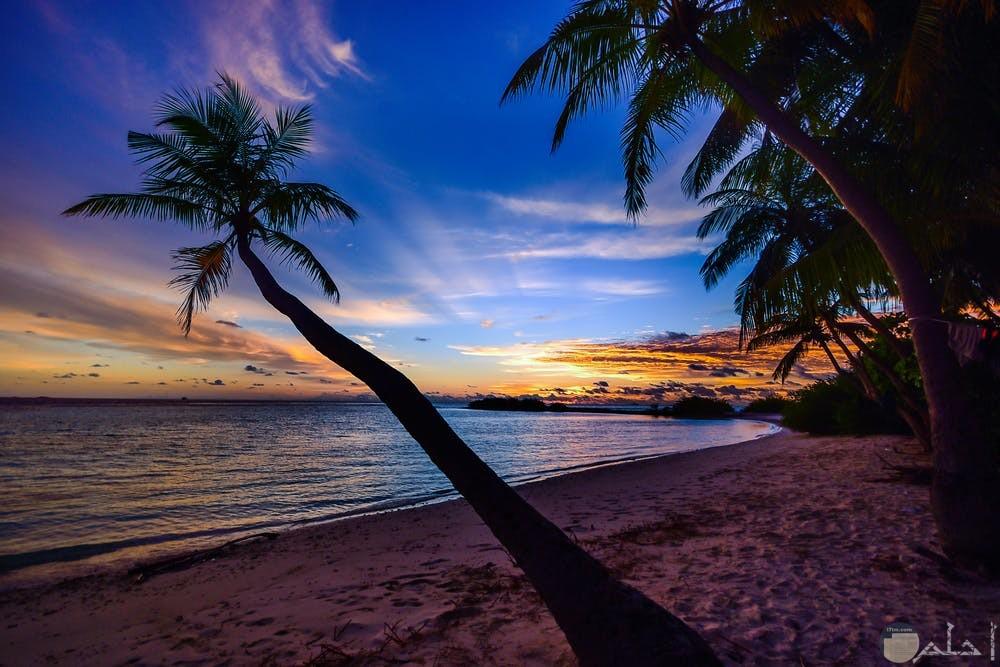 صور هادئة لجمال البحر والأشجار