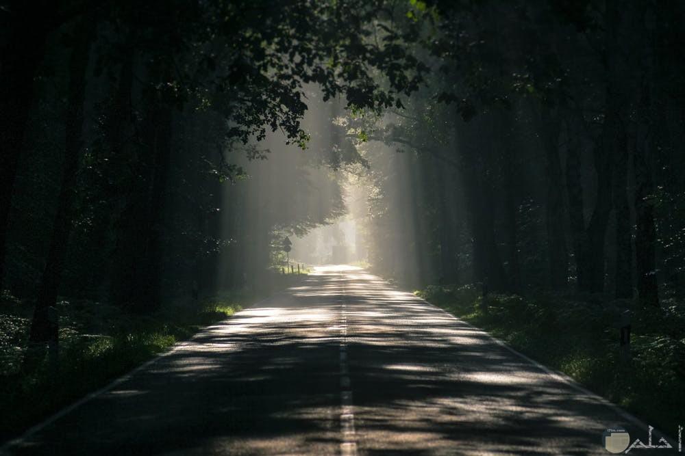 صور الغابات والطريق