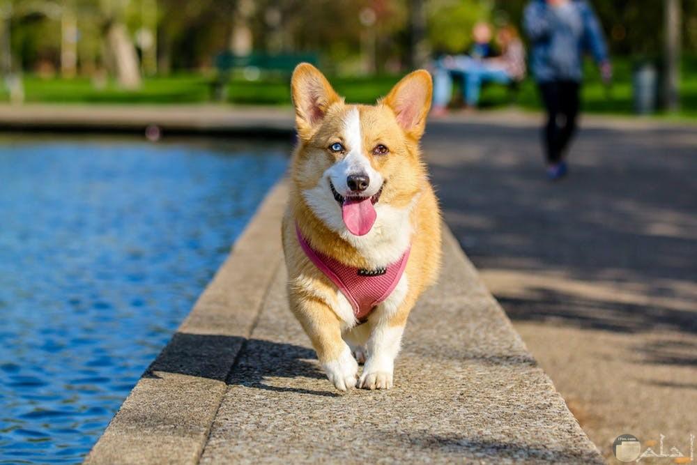 صور كلب في حمام السباحة