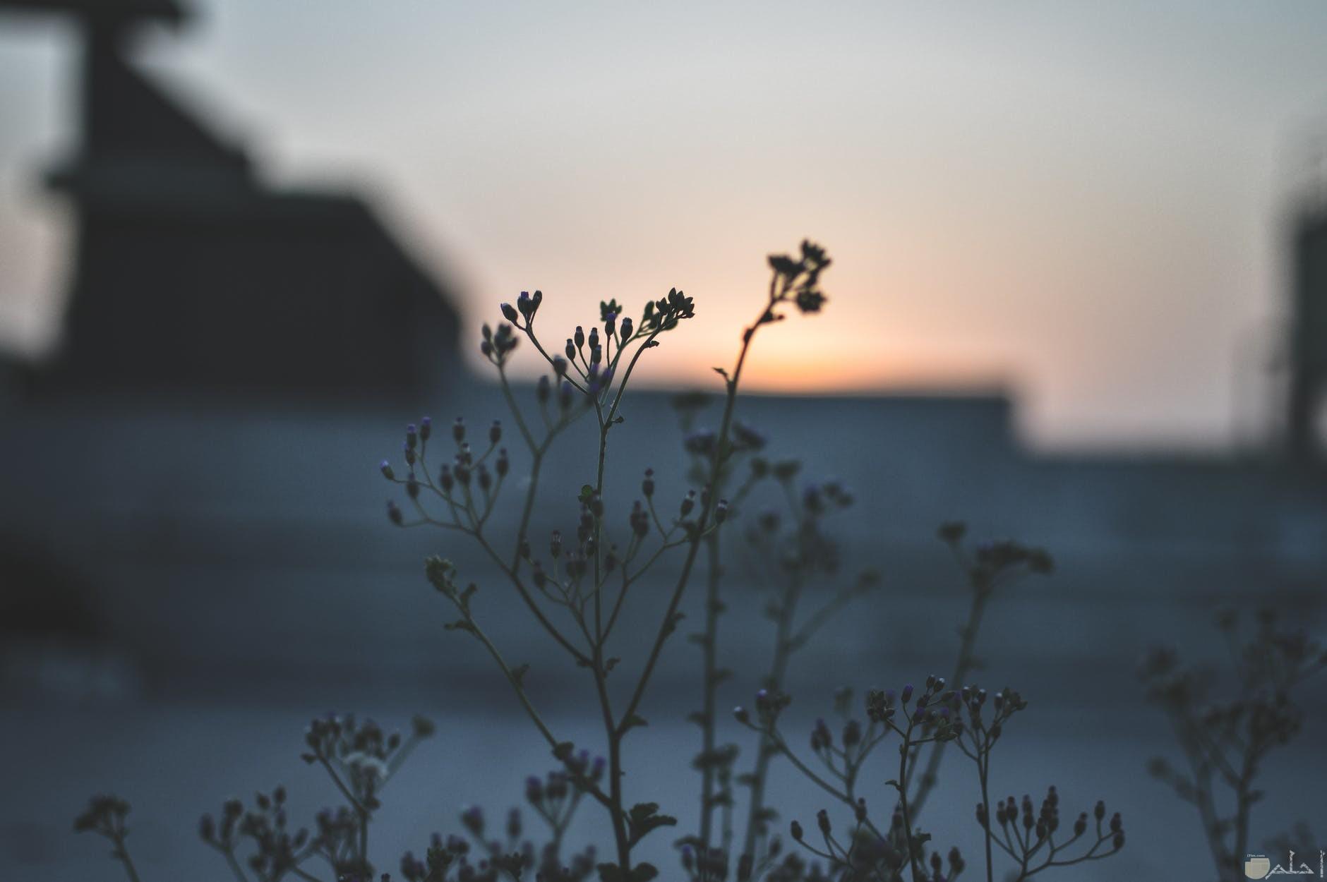 صور نباتات مع غروب الشمس