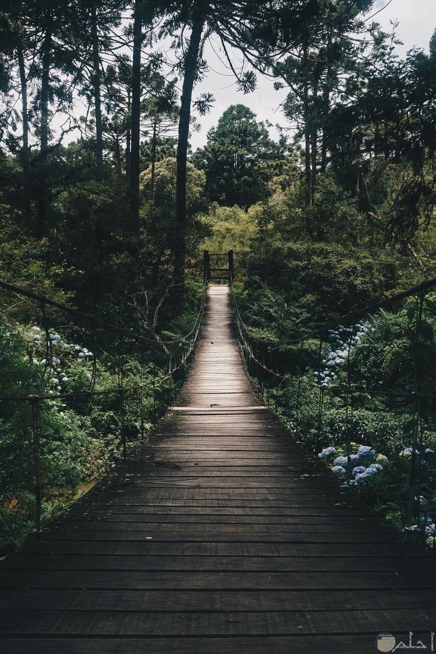 صور طبيعية لجسر وسط الغابات