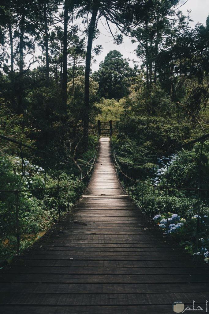 صور جسر بالغابات