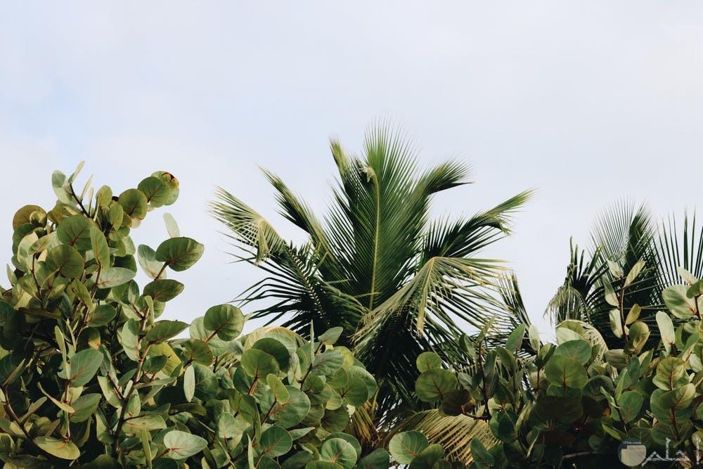 صور نباتات تجنن