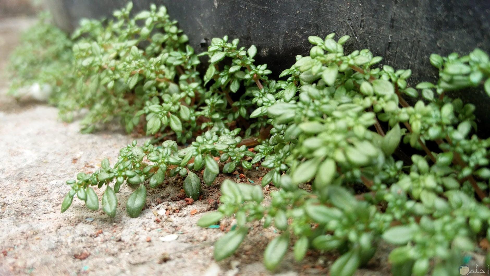 نباتات بالأرض