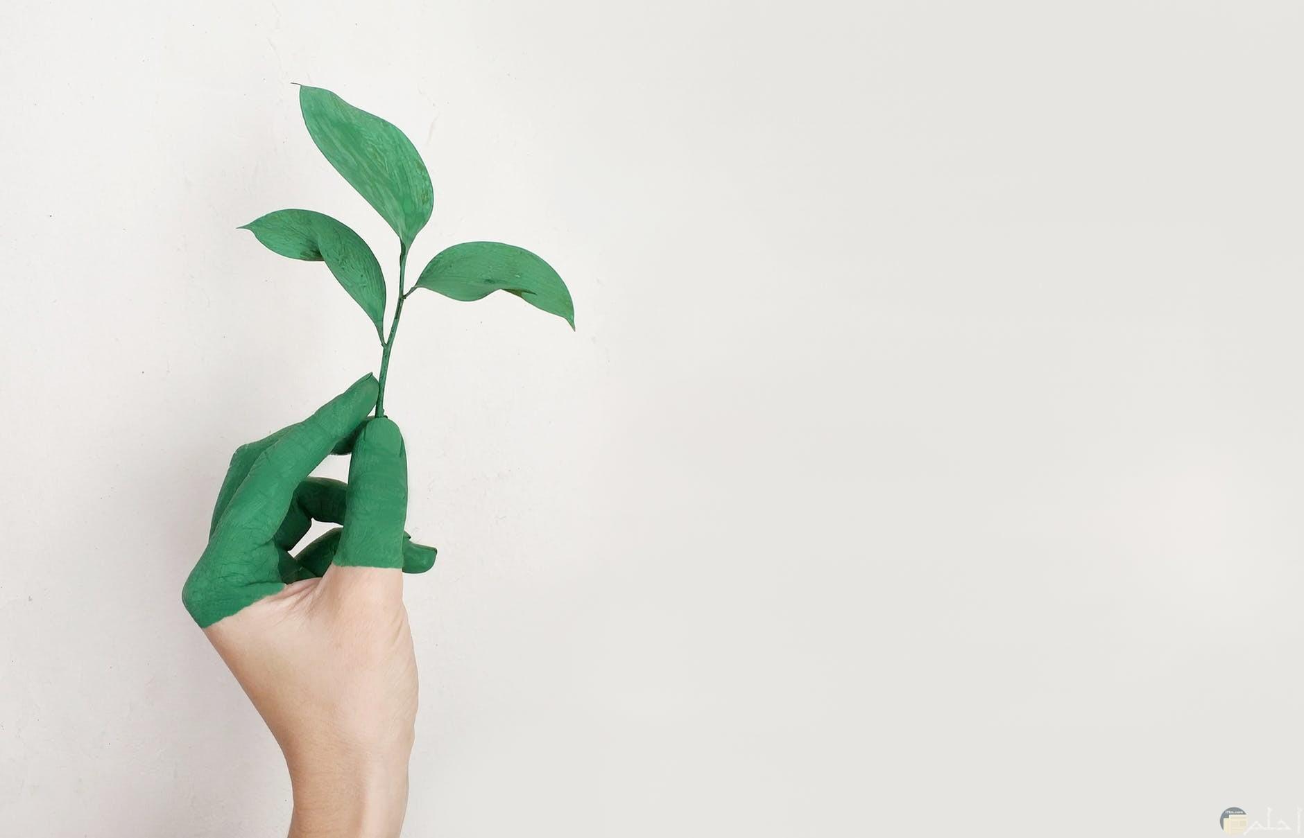 نباتات مرسومة روعة