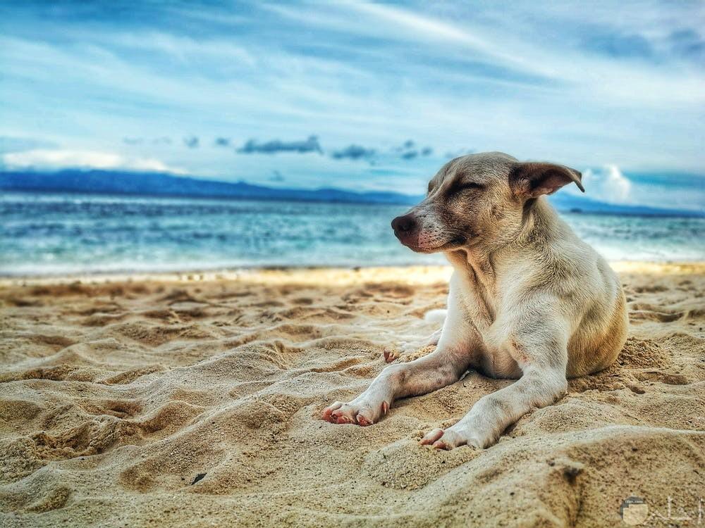صور كلب على البحر