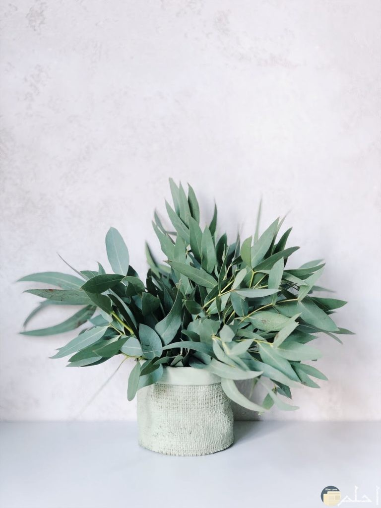 صور نباتات روعة