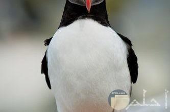 صور طيور حمام زينة
