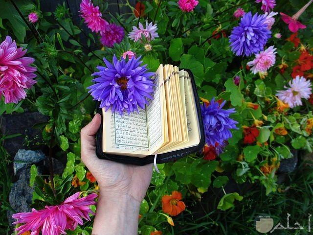 صور قرأن جميلة