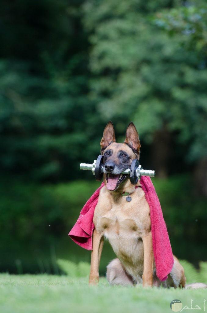 صور كلب يلعب رياضة