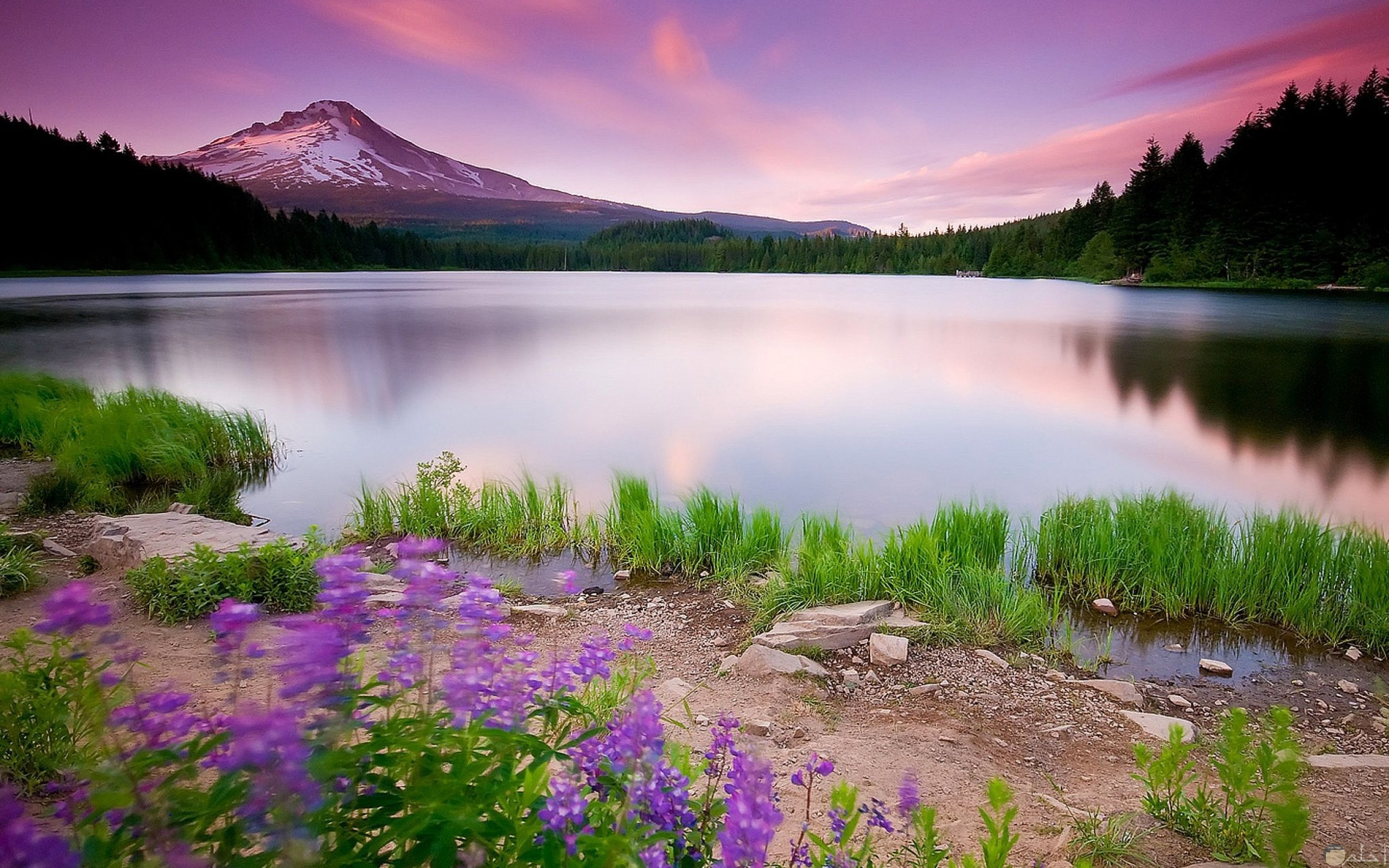 صورة طبيعية لنهر صافي رائع بالجمال
