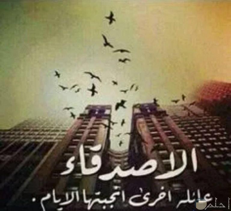صوره بها مباني والعديد من الطيور تطير في السماء