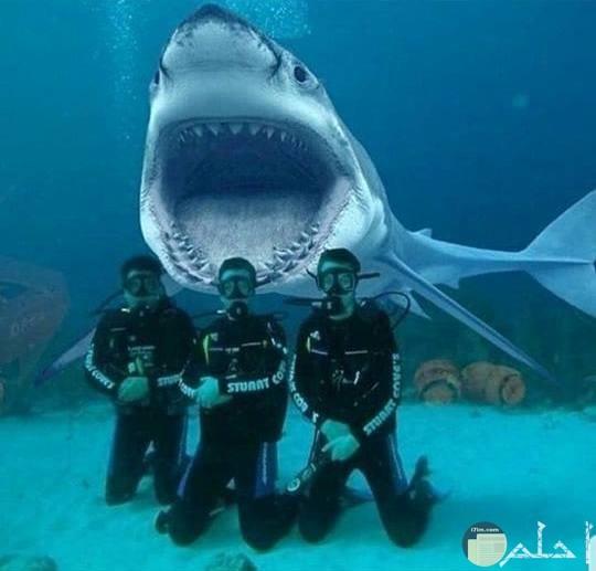 ثلاث شباب يلتقطون سيلفي مع سمكة قرش