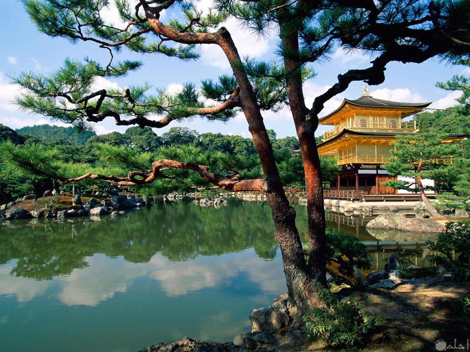 بيت صغير جميل وسط الطبيعة الخلابة