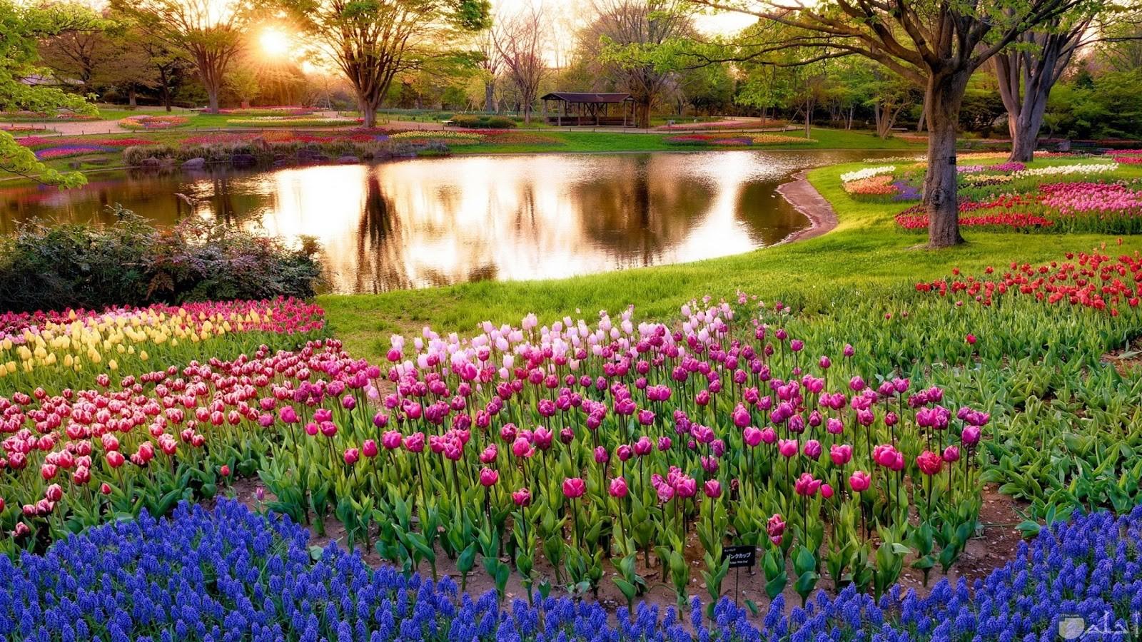 زهور طبيعية روعة