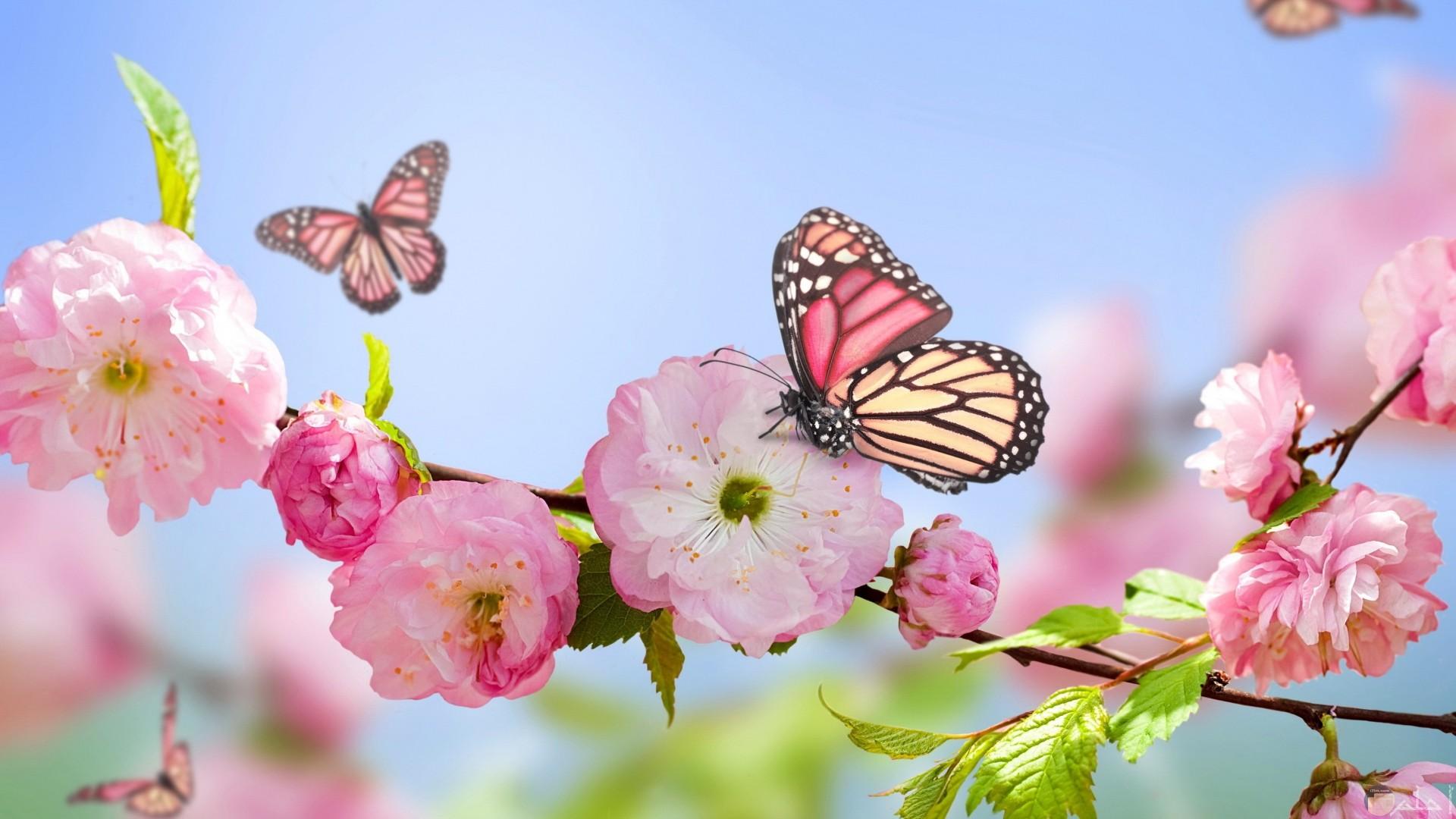 زهور وردية مع فراشات رقيقة