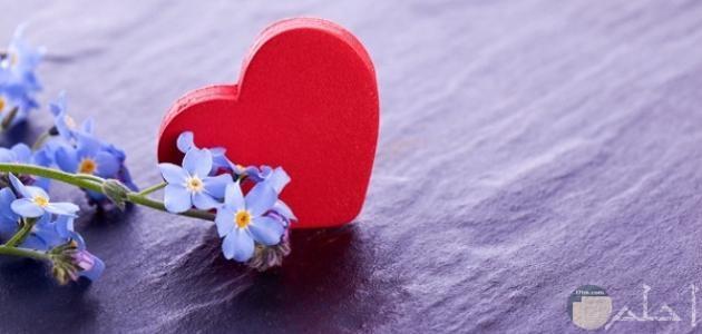 قلب احمر وورد