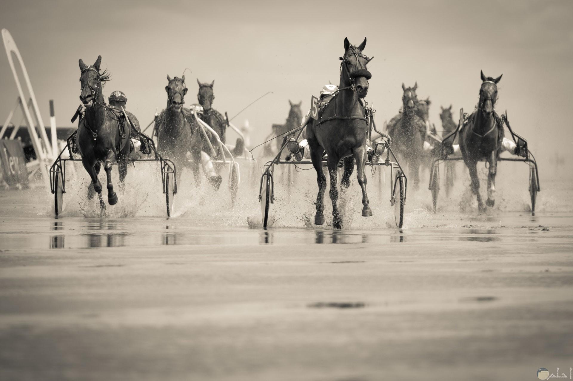 صورة أكشن مميزة لمجموعة من الأحصنة تجري سريعا علي المياة