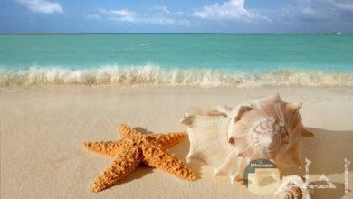 صورة بحر الصيف hd