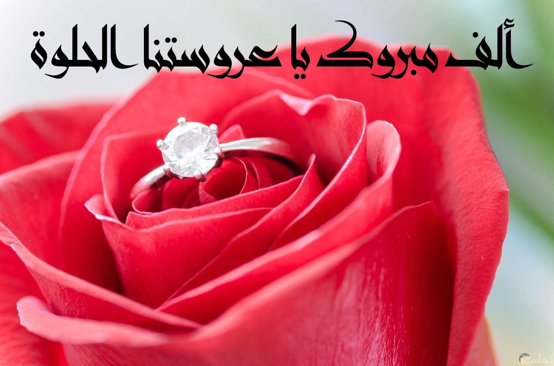 صورة تهنئة جميلة جدا للأفراح مكتوب عليها ألف مبروك لعروستنا الحلوة وخاتم حلو داخل وردة حمراء