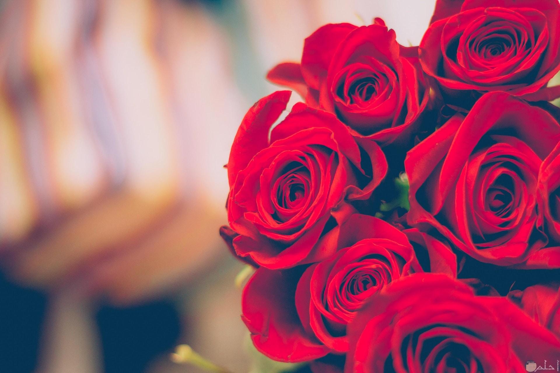 صورة جميلة جدا لباقة ورد أحمر حلوة رومانسية