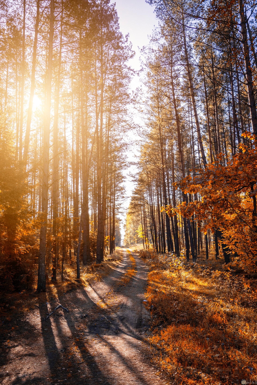 صورة جميلة جدا للفيس بوك لطريق وسط الغابة بين الأشجار