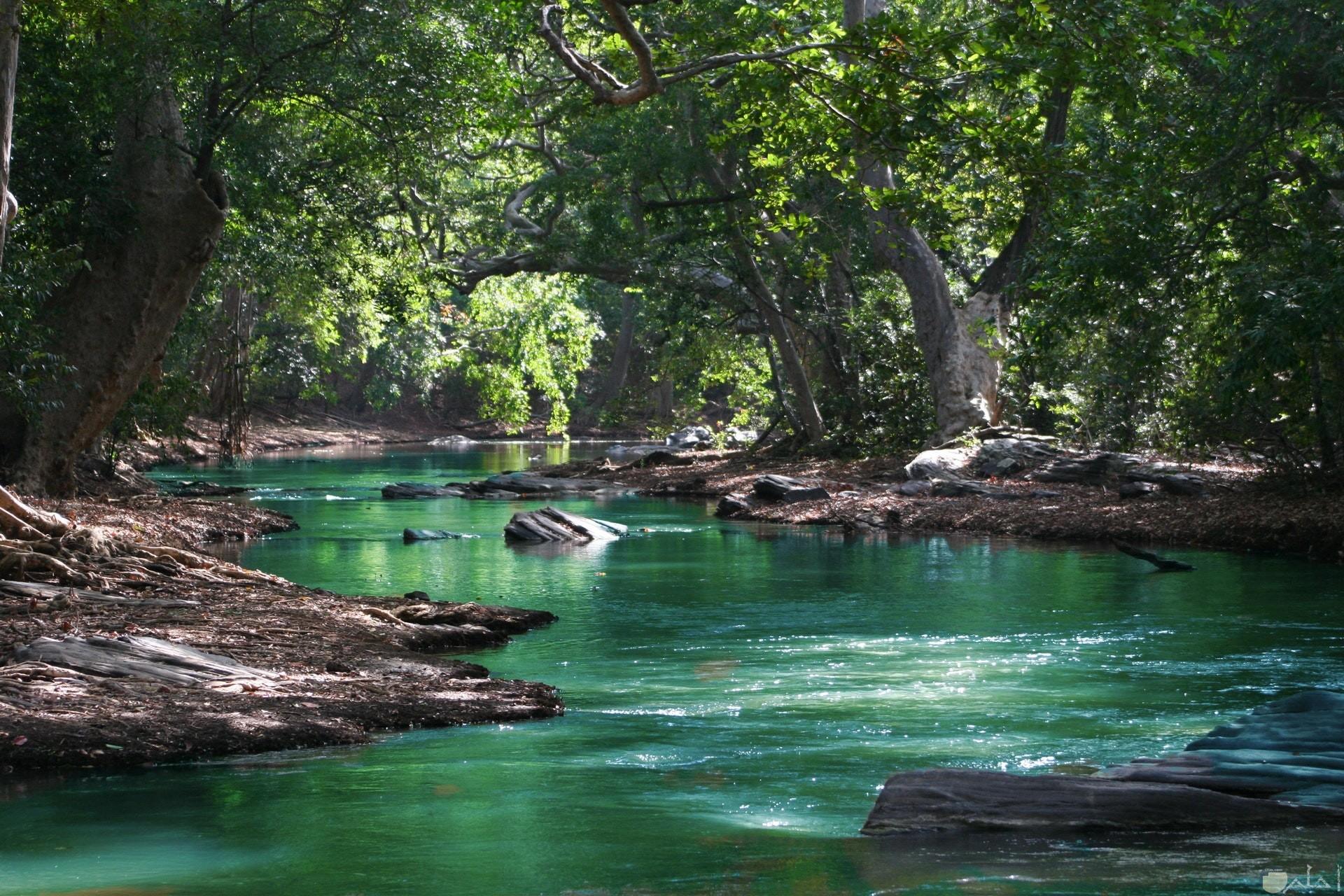 صورة جميلة جدا للفيس بوك للطبيعة حيث المياة المتدفقة والأشجار