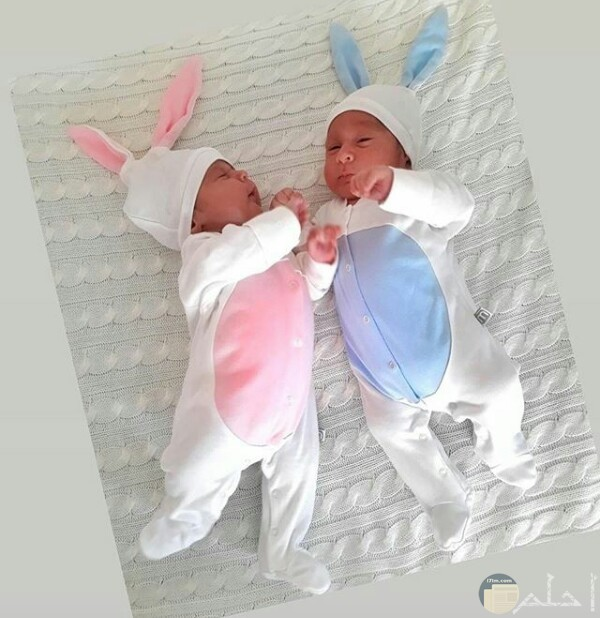 صورة جميلة حول توائم ولاد بيبهات حلوين لابسين لبس أرنب