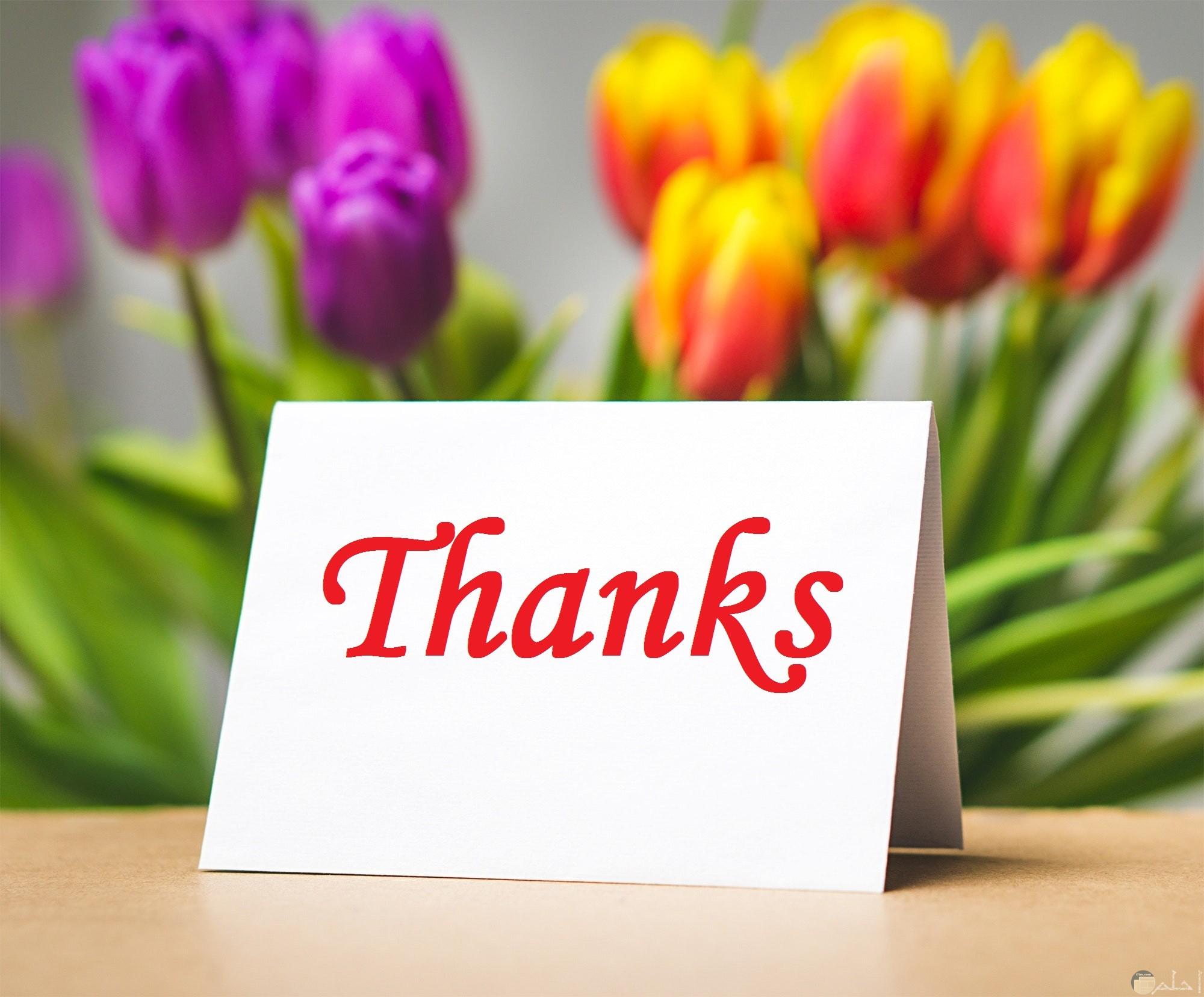 صورة جميلة لشكرا بالإنجليزي باللون الأحمر مكتوبة علي بطاقة وخلفها ورود حلوة