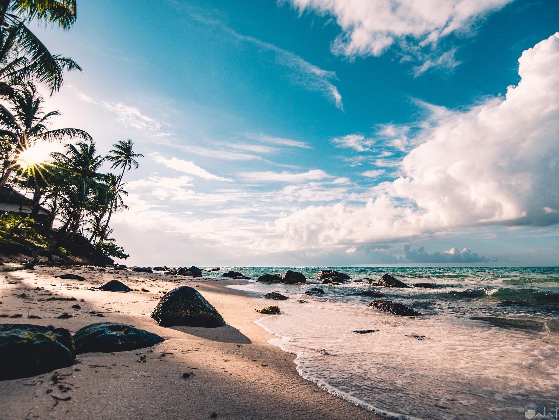صورة حلوة جدا للبحر والشاطئ والنخل جميلة للفيس بوك
