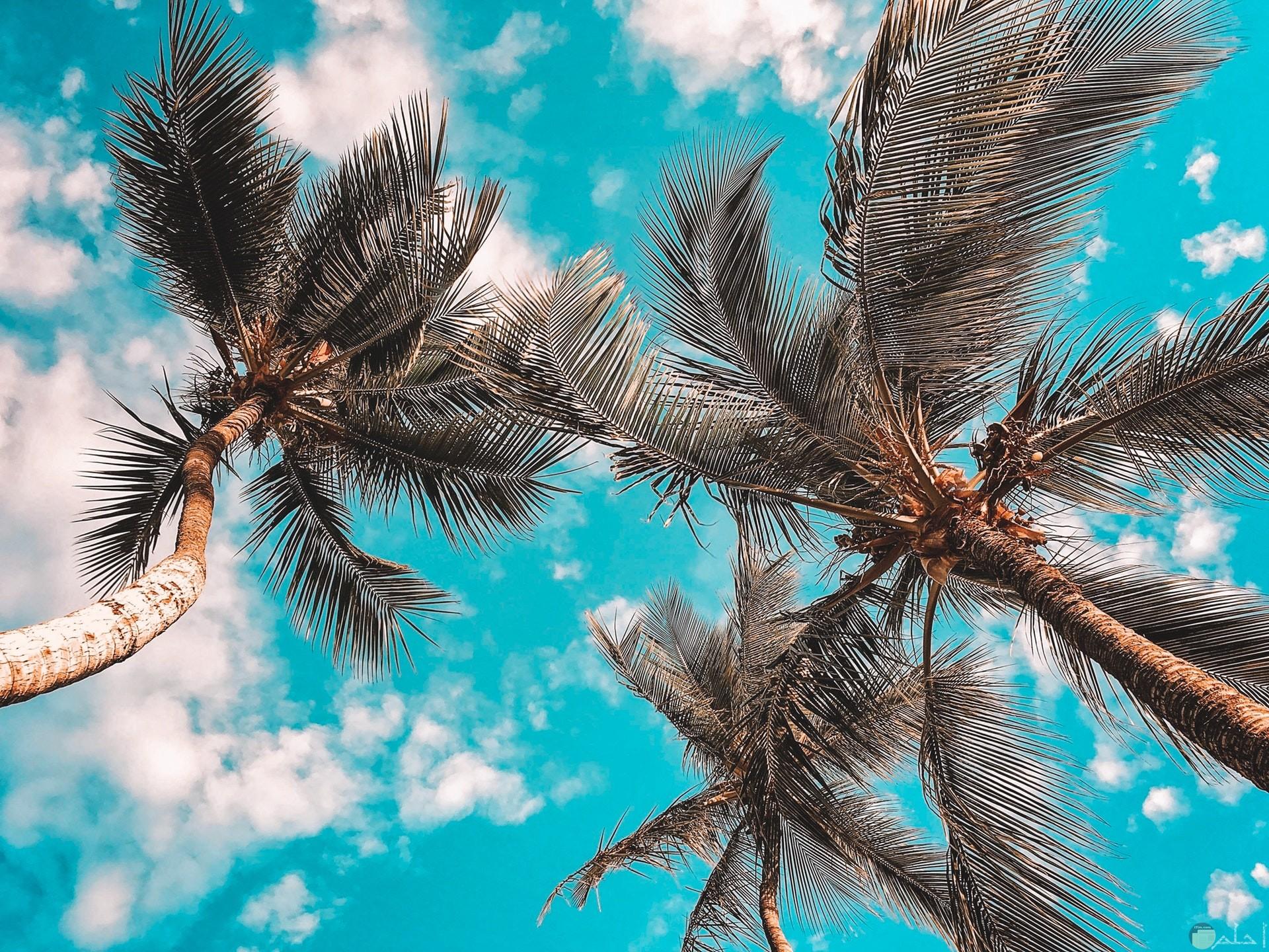 صورة حلوة جدا للسماء الصافية في جو مشمس مع ثلاث نخلات