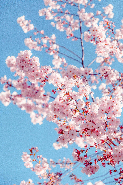 صورة حلوة جدا للفيس بوك لشجرة بورودها الجميلة
