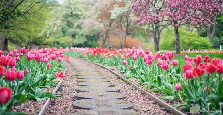 صورة حلوة جدا للفيس بوك لطريق وسط الورود الجميلة والأشجار