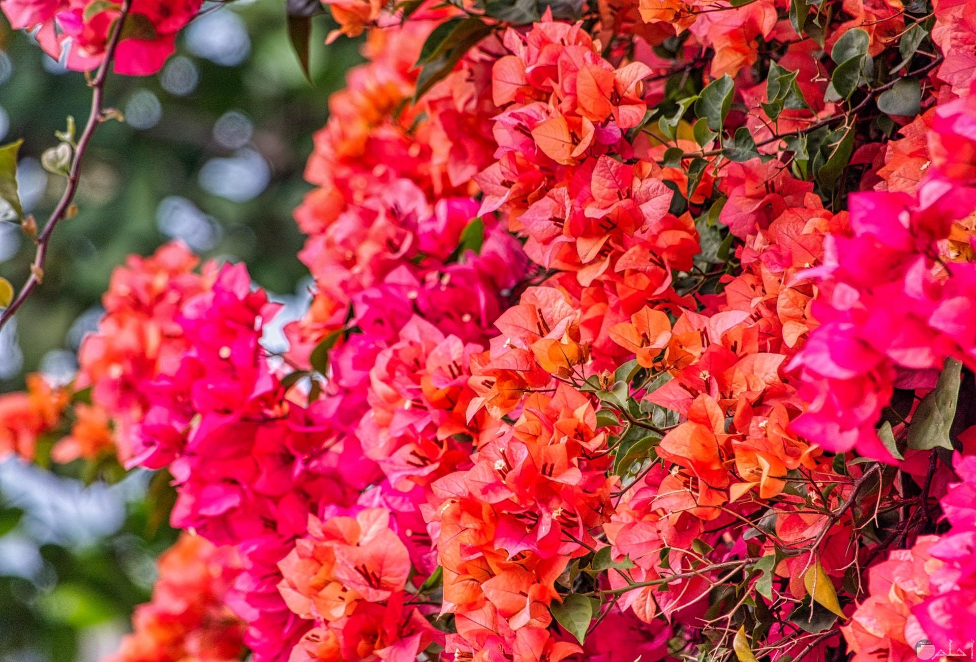صورة حلوة للفيس بوك لمجموعة من الورود الجميلة بألوان كثيرة