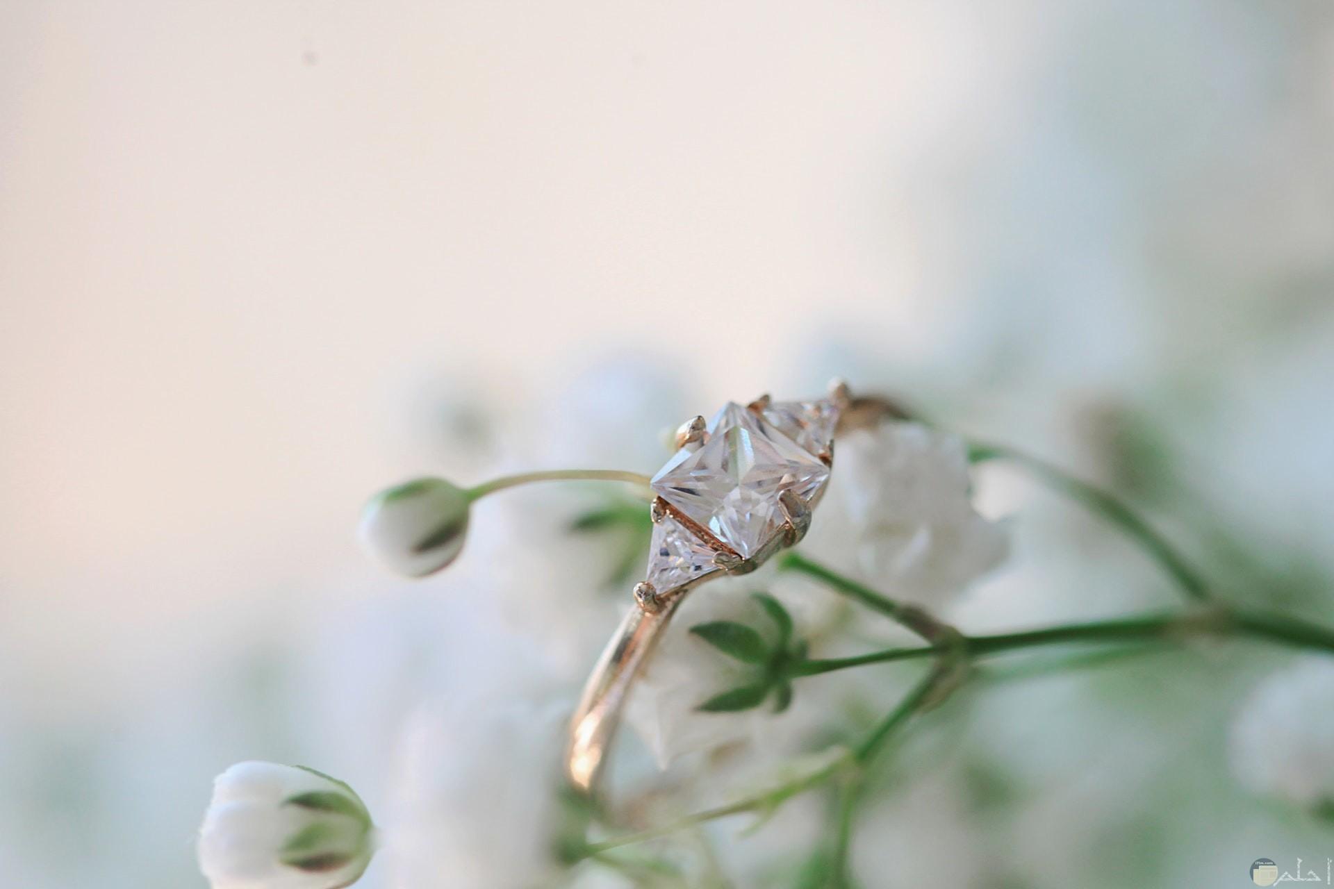 صورة خاتم جميل جدا بمجوهرات مميزة به مع خلفية ورد أبيض جميلة