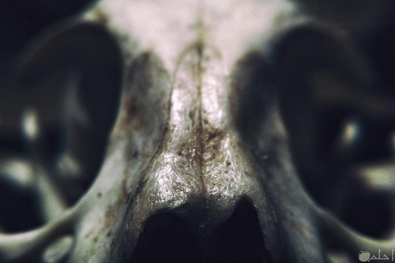 صورة رعب لجمجمة إنسان من قريب مخيفة جدا