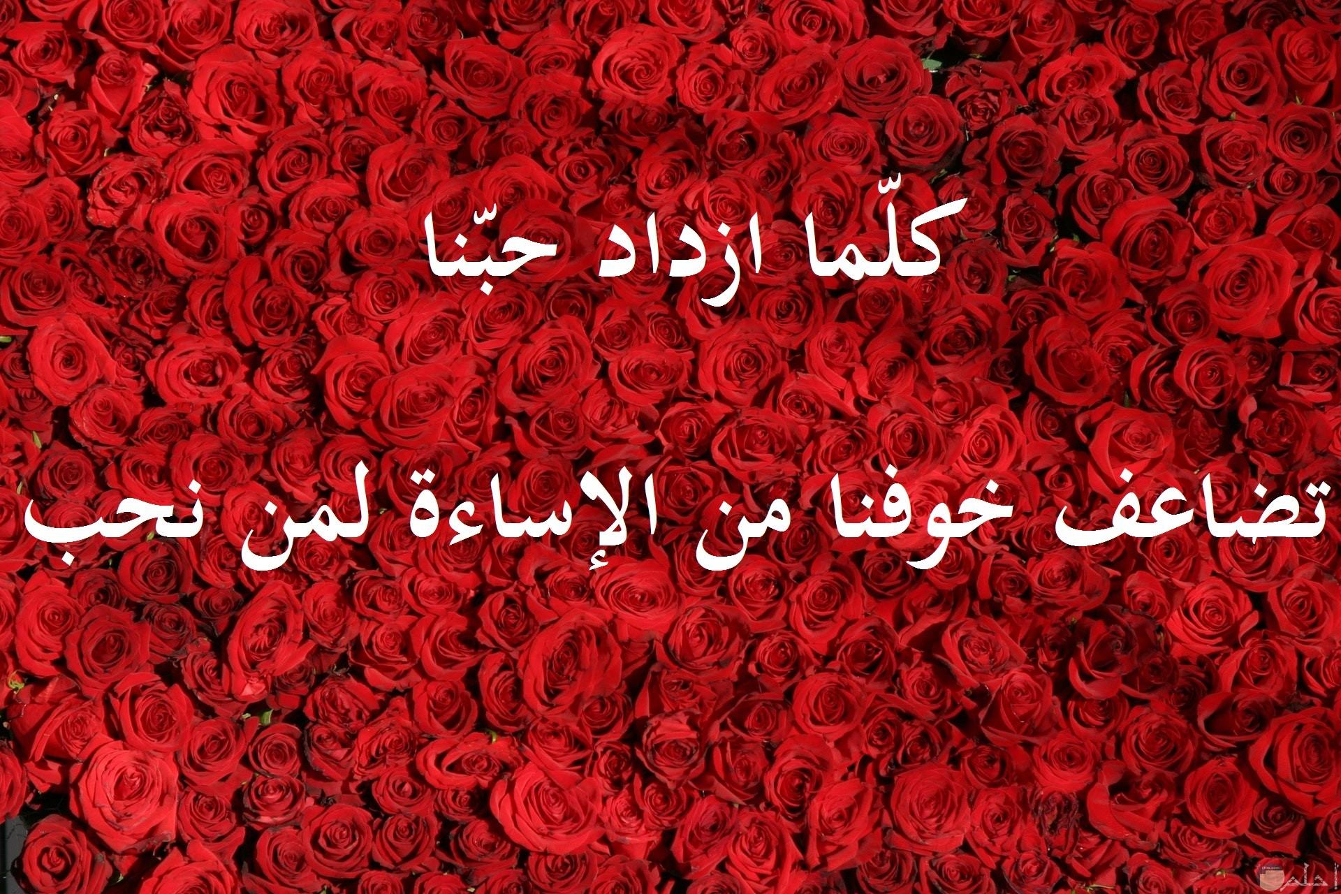 خلفية ورد احمر رائع مدونه بها كلام حب وعشق