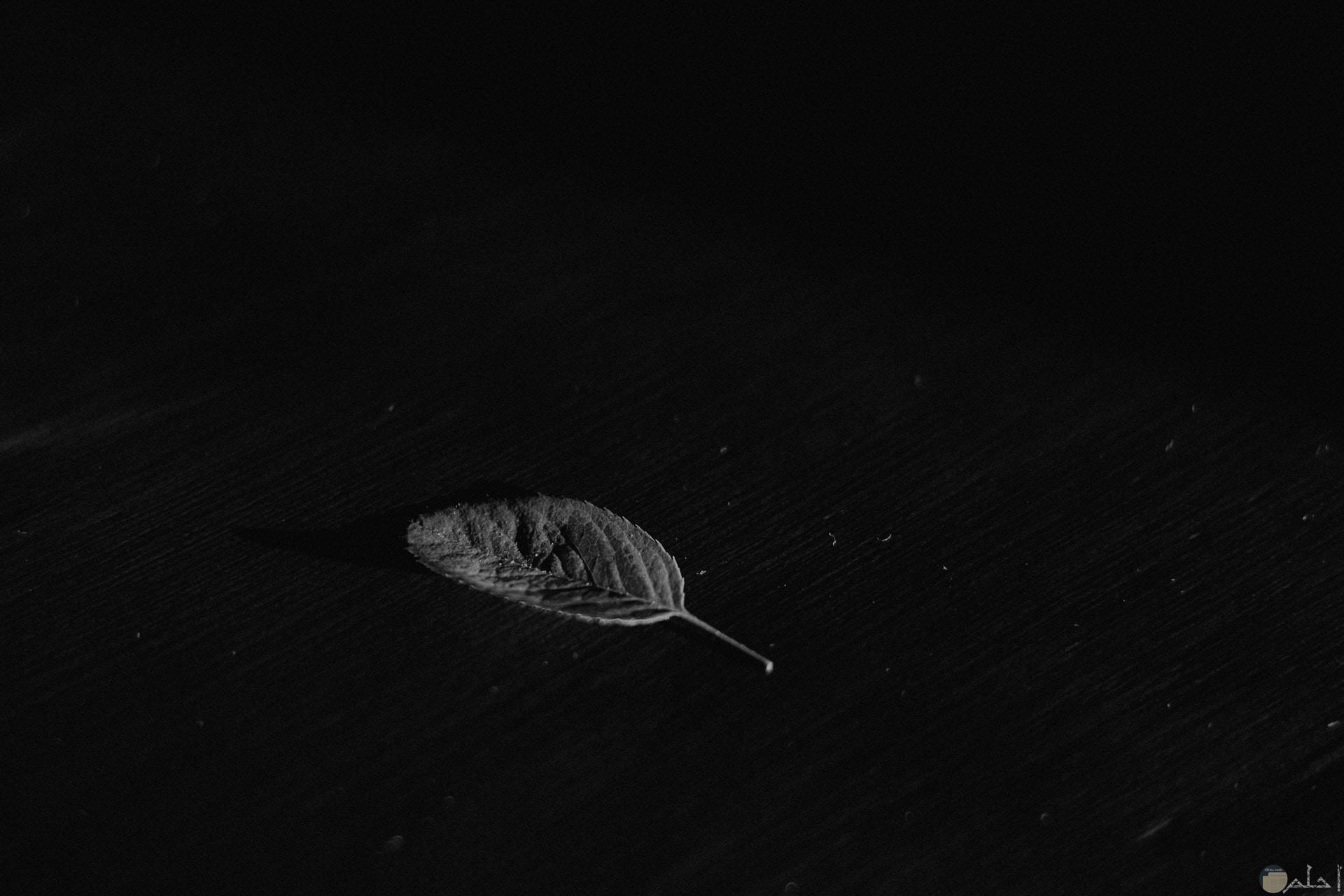 صورة سادة سوداء غامقة بها ورقة شجر